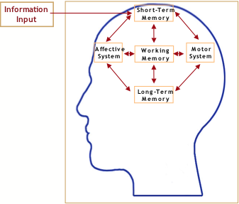 an introduction to the study of human memory Memory disorders are worth studying in their own right the scope is  panied by a set of separate figures, each highlighting the brain structures implicated in.